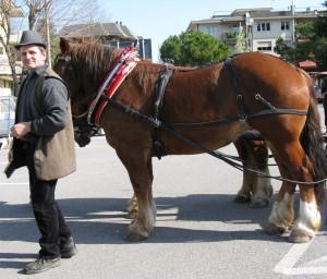 il-proprietario-dei-cavalli-claudio